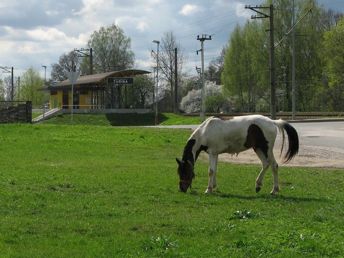 Turības zirgs